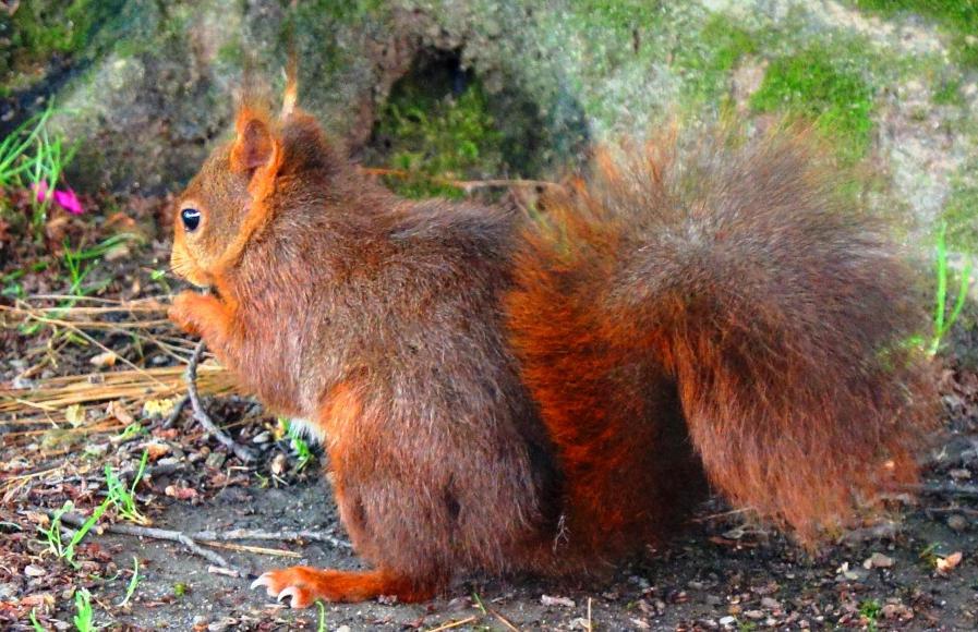 Programme Écureuils & hérissons